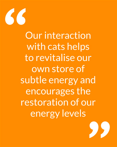 Our interaction with cats helps to revitalise our own store of subtle energy and encourages the restoration of our energy levels
